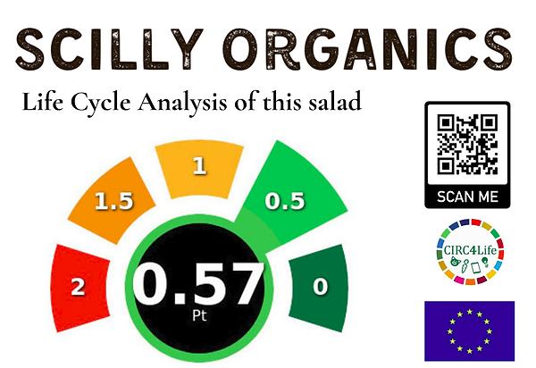 Salad LCA final.png