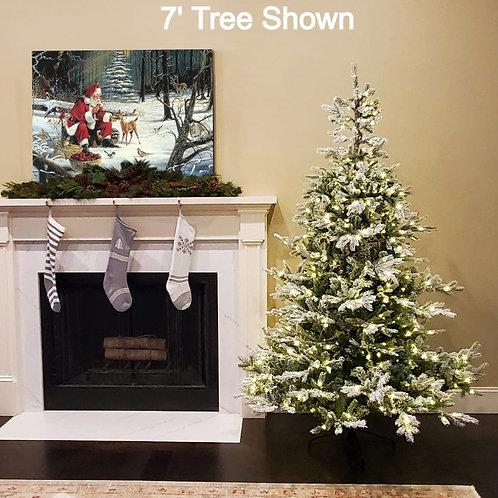 7' Snowy Grandis Fir Tree with Warm White Lights