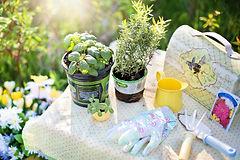 flower-summer-spring-green-garden-garden
