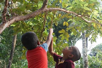 kerala-india-kids-guava-tree-plant-14587