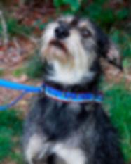 dog-Tucker.jpg