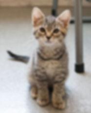 Cindy-kitten.jpg