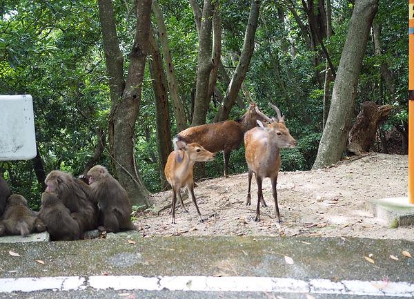 屋久鹿と屋久猿