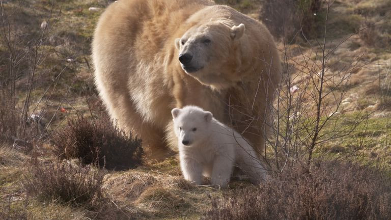 Highland Polar Bear.jpg