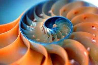 fibonacci.jfif