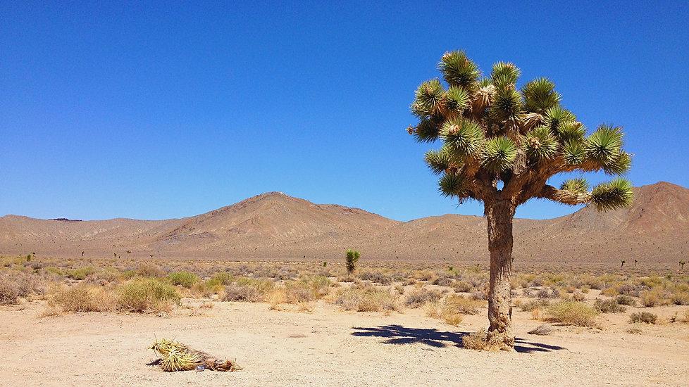 desert03.jpg