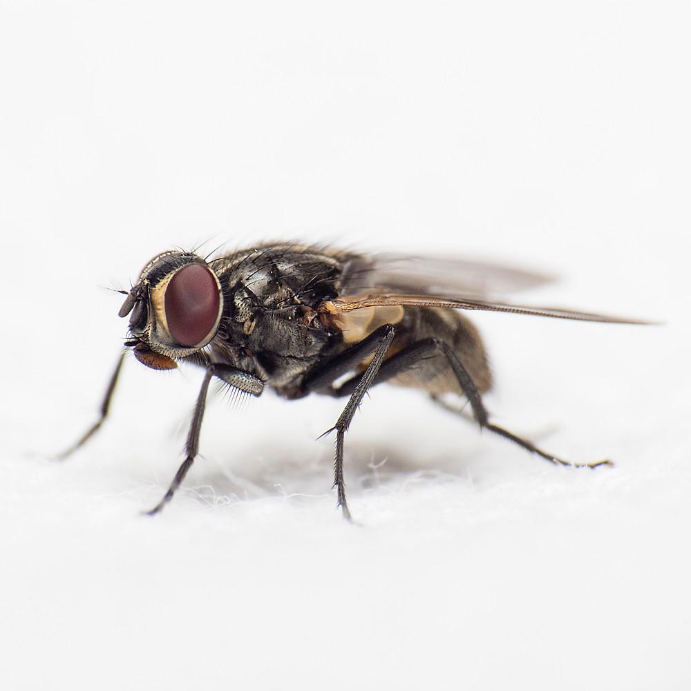 Alberto die Fliege wurde zum Star unseres Videos. | Credit: Gabriel Manlake | www.unsplash.com