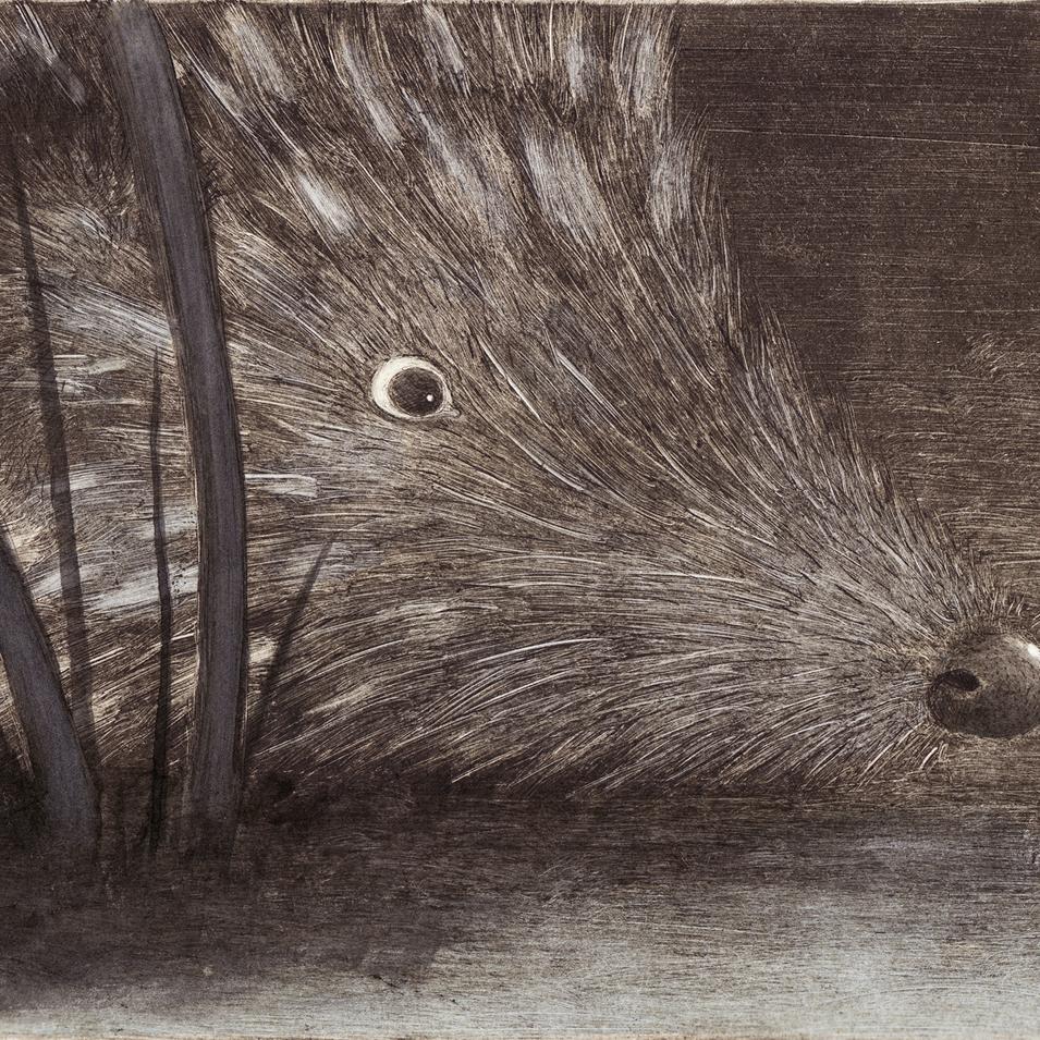 A hedgehog came snuffling past.