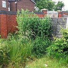 garden clearance.jpg