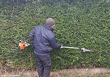hayden hedgecut.jpg