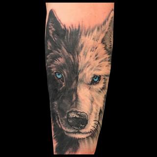 Dual color wolf portrait