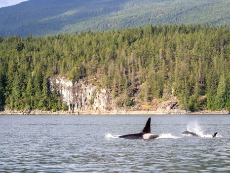 Gibsons.... It's closer than you think and well worth a day trip!