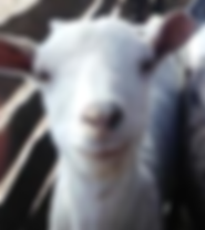 t-goat.png