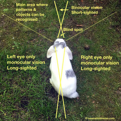 rabbit_vision
