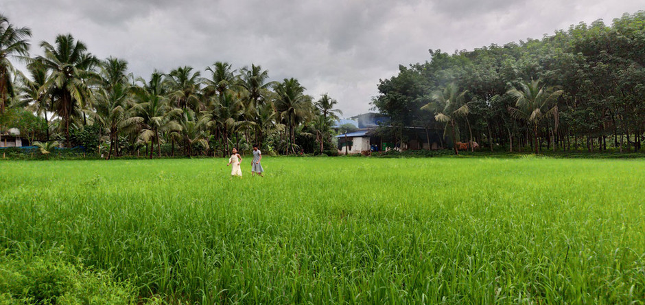 Monsoon magic in Nilambur