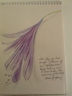 Seeds of Glory