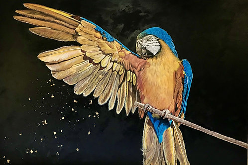 Bec Wilson | Magic Macaw