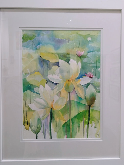 Glynis Brown | White Lotus