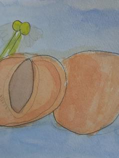 Apricot still life