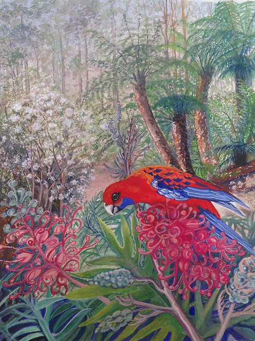Jan Parish | Crimson Rosella