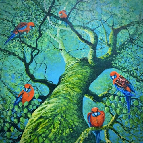 Jan Parish | Dandenong Ranges Birds