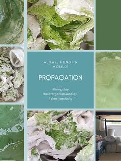 Algae Propagator