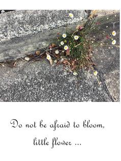Do not be afraid to bloom, little flower