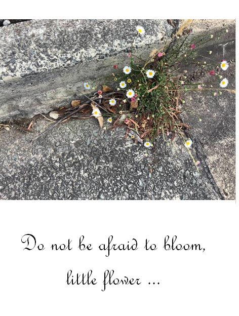 Do not be afraid to bloom, little flower