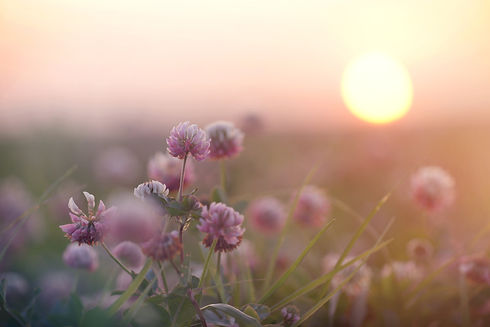 sunset-in-the-field-1026680128_1256x838.