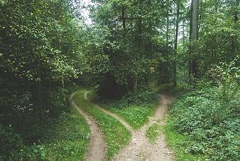 woods-768753_1920.jpg