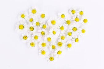 daisies-1535532_1920.jpg