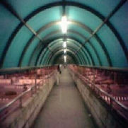 PIP - MonkDragon - 2009.jpg