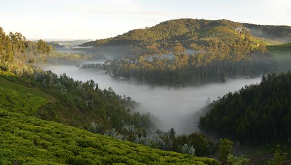 Field site Nyungwe Rwanda.JPG