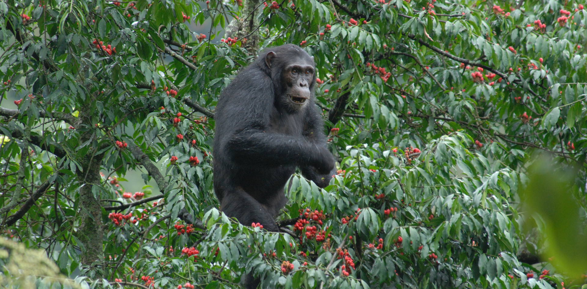 Field site Nyungwe Rwanda chimpanzees.jp