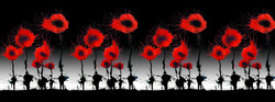 Poppies : Black Sky