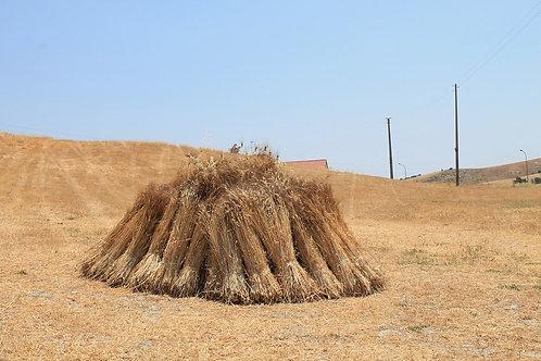 Semola di grano senatore cappelli integrale macinata al mulino ad acqua