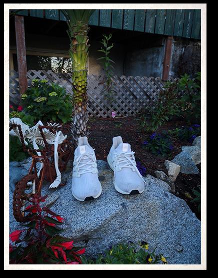Zac's Shoes