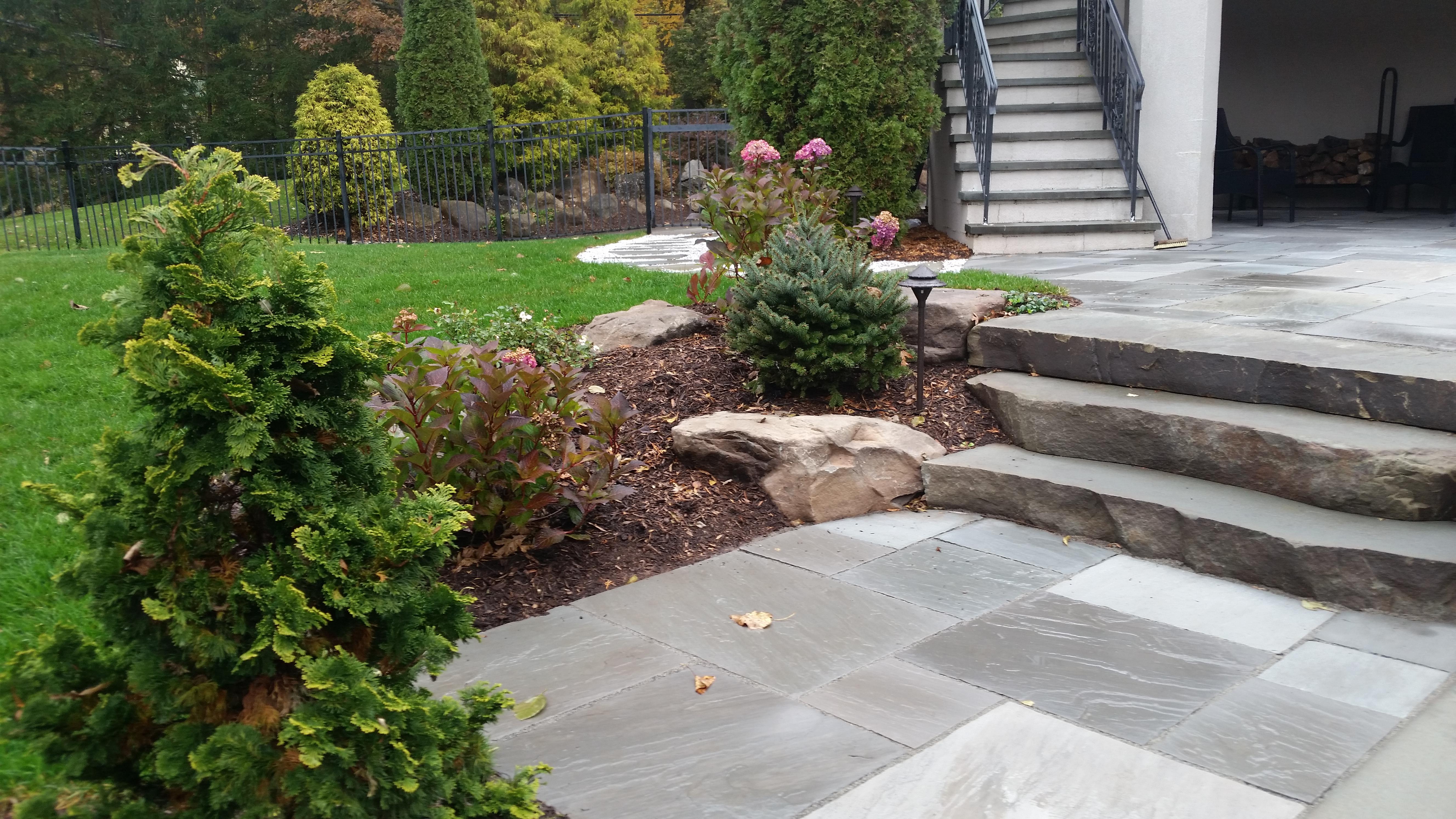 spitz planting_steps
