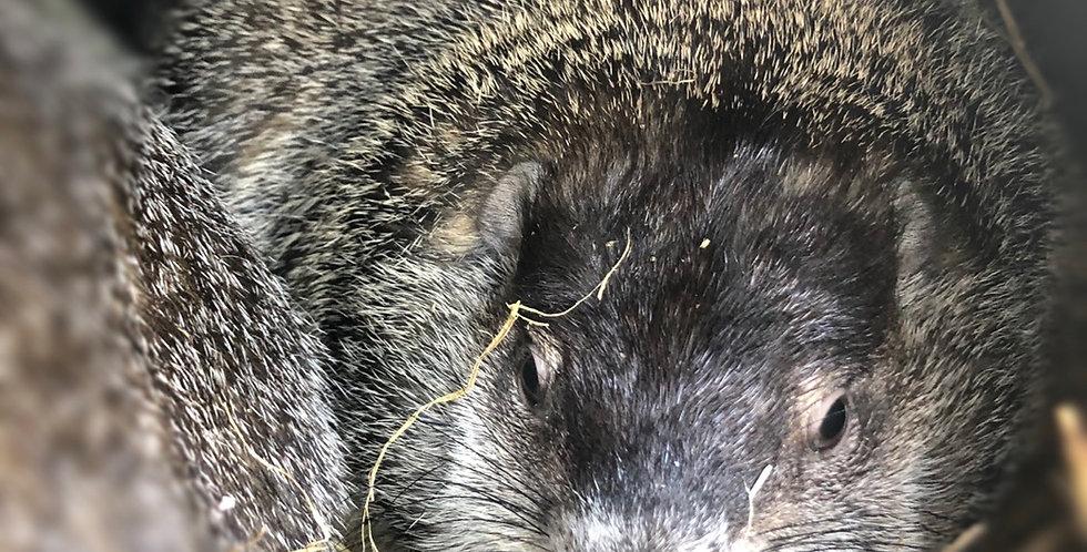 2021 Groundhog