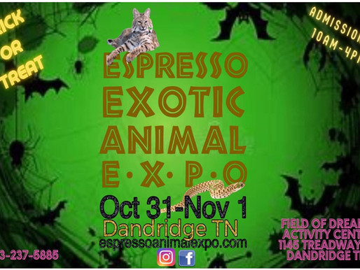 Upcoming Expo