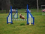 Paddy Jumping.JPG