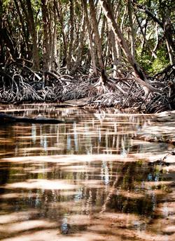 Mangrove de l'Ile Moucha