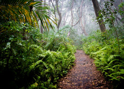 Forêt de Jozani