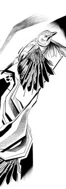 Eurasian Jay I