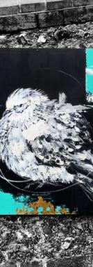 Pigeon II (2020)