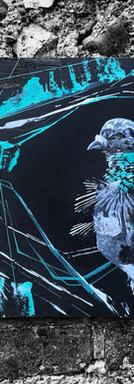 Pigeon 2021 VI