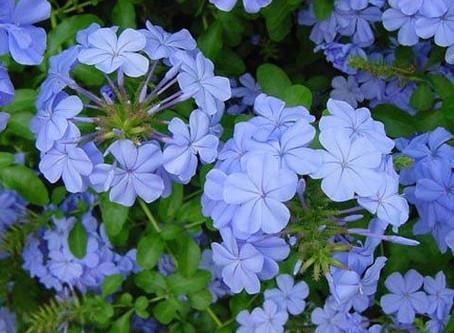 Azul en el jardín