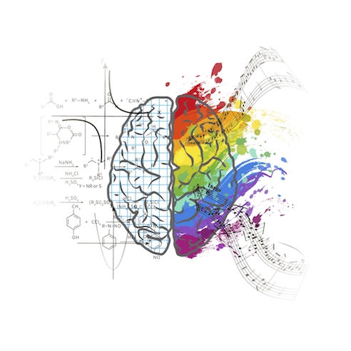 left brain right brain debunked