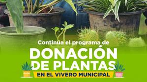 CONTINÚA PROGRAMA DE DONACIÓN DE ÁRBOLES Y PLANTAS EN EL VIVERO MUNICIPAL