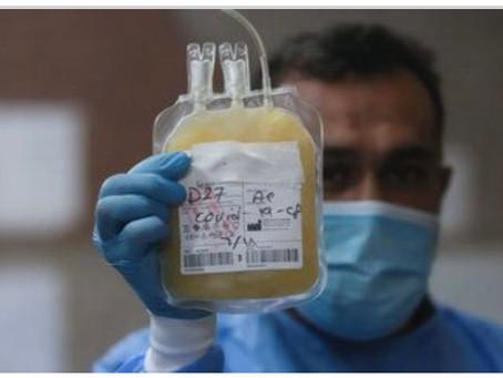 Suero equino: así funciona el prometedor tratamiento contra COVID-19 a punto de aprobarse en México
